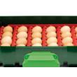 Covina ET49 félautomata mini digitális keltető digitális hőmérővel.